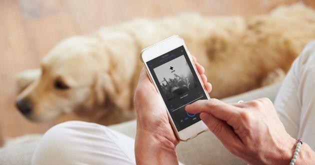 chien qui écoute musique sur spotify