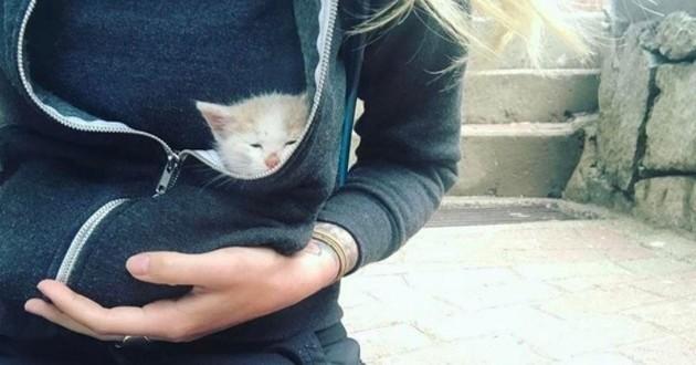 chaton sauvetage pérou