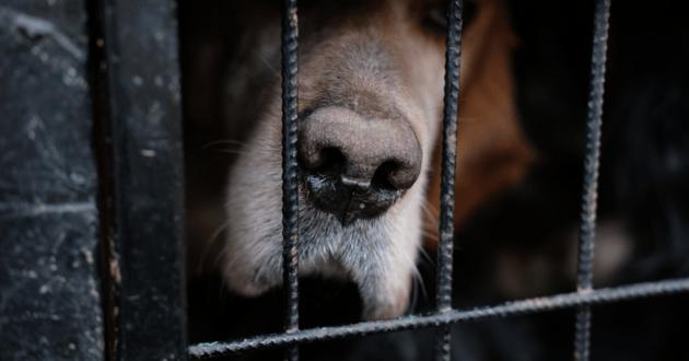 Museau d'un chien enfermé dans une cage