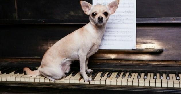 piano musique chien