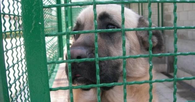 Muxu chienne adoptée