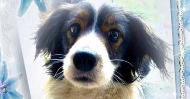 Myloo le chien en fourrière