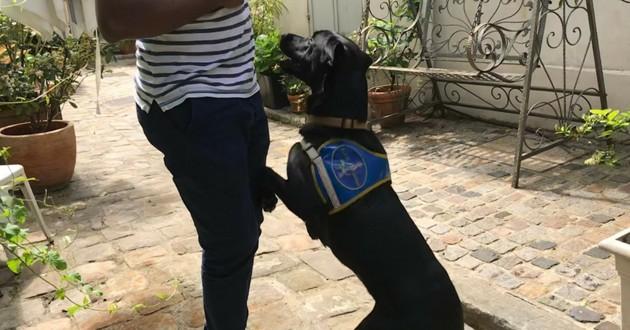 chien guide noir labrador