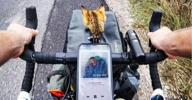 Nala le chat dans le panier du vélo de Dean son maître
