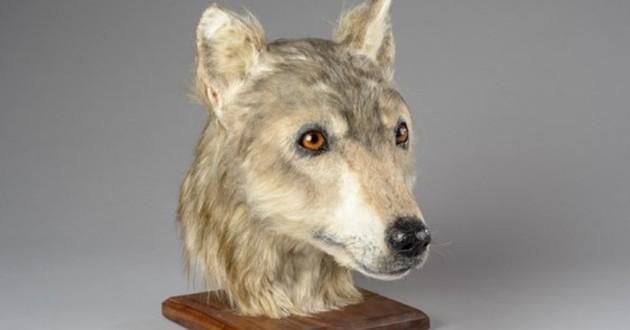 Des chercheurs écossais ont reproduit la tête d'un chien du Néolithique