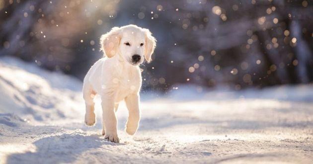 chiot dans la neige