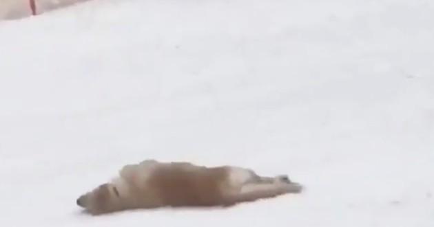Ce chien qui glisse dans la neige passe-t-il un bon moment ? (Vidéo)
