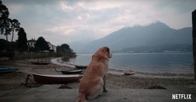 Vous et votre chien pourriez être les stars de la prochaine série Netflix