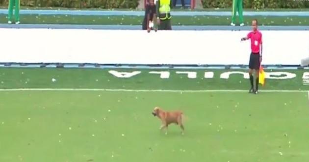chien terrain de foot
