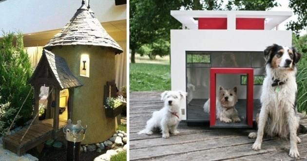 Niches pour chiens originales