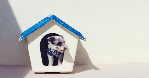 niches pour chien pas chères