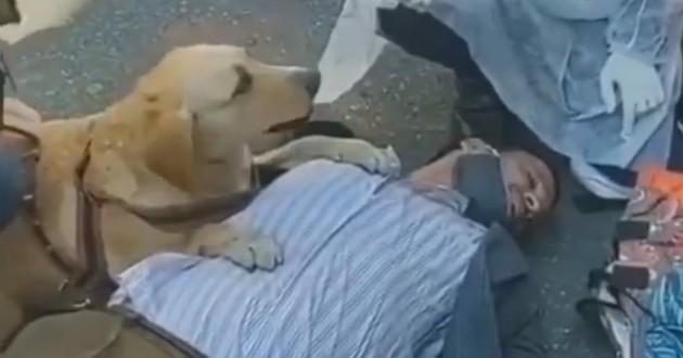 un chienne guide d'aveugle qui protège son humain