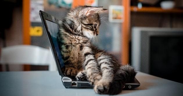 Chaton ordinateur