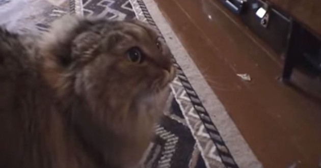 Marquis le chat qui dit non