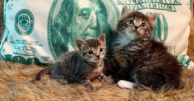 barnes and noble, deux chatons de refuge