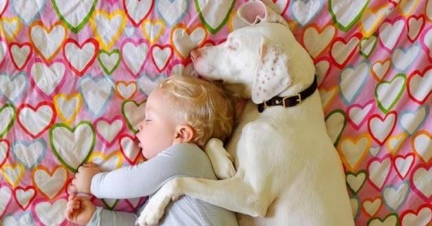 bébé chien sieste