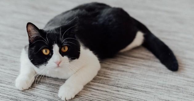chat par terre