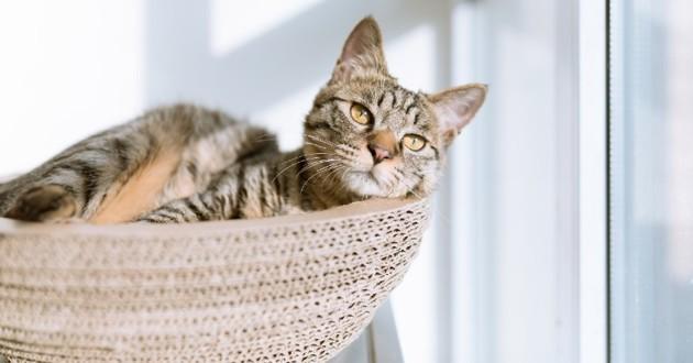 Sélection paniers pour chats