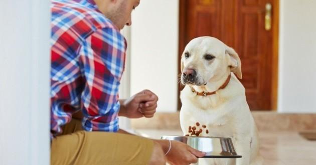 nourrir son chien