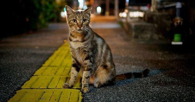 un chat errant de nuit