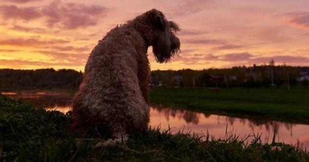 un chien de nuit
