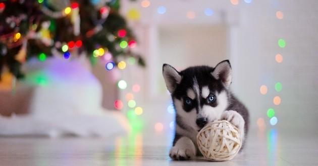 chien qui fête Noël