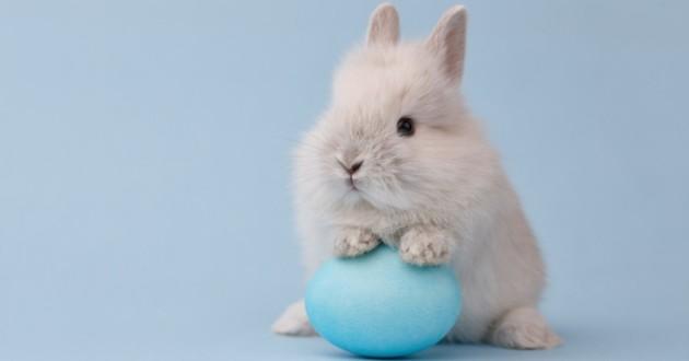 un lapin avec un oeuf de paques