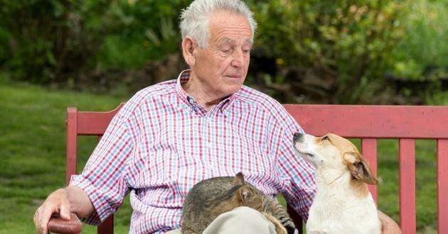 vieux monsieur chien chat