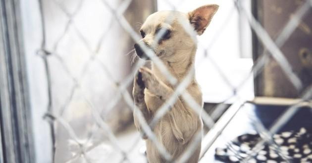 chihuahua prière