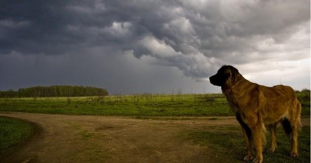 calmer un chien qui a peur de l'orage