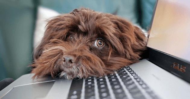 Quand la crise sanitaire transforme les sociétés américaines en entreprises Pet Friendly