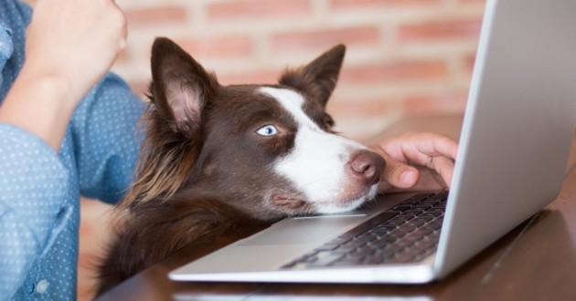 un chien avec un ordinateur