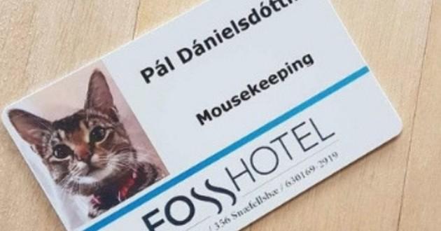 Un chat embauché par un hôtel islandais pour chasser les souris !