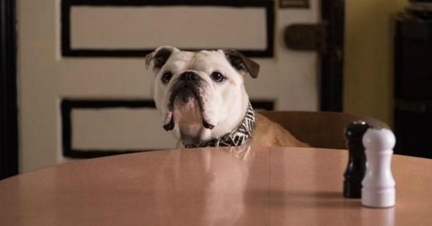 Marvin le chien du film Paterson obtient la Palme dog