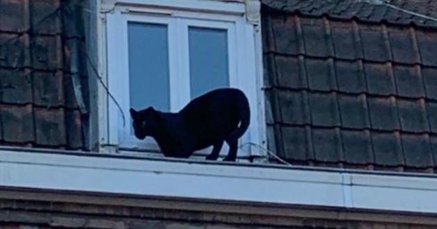panthère noire sur une fenêtre