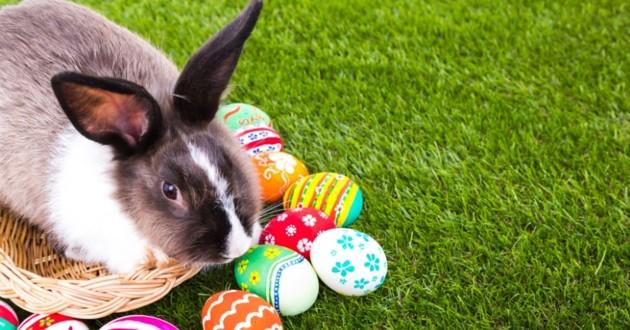 un petit lapin avec un oeuf de Pâques