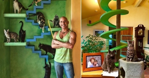 maison paradis pour chat