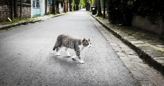 chat errant à Paris