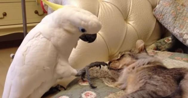 Ce perroquet tient absolument à jouer avec ce chat qui n'est pas du tout intéressé (Vidéo)