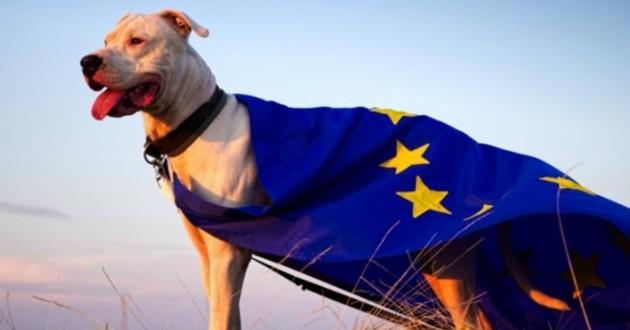 Elections européennes 2019 : un enjeu majeur pour les animaux