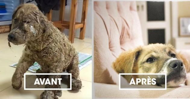 Pascal chien