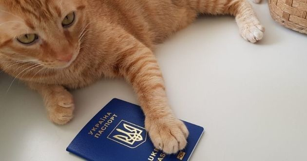 passeport pour chat