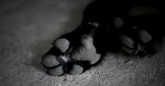 patte chien noir