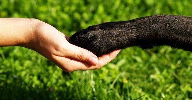 pattes main chien