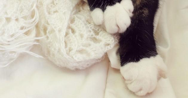 des pattes de chat noir avec de petites chaussettes blanches