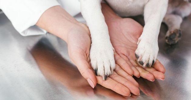 pattes de chien et mains