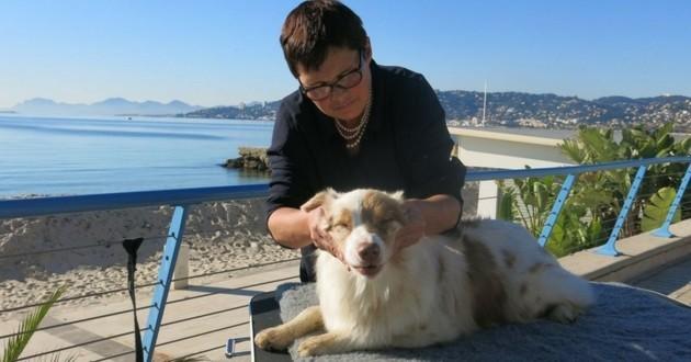 Pauline Arnt massage canin