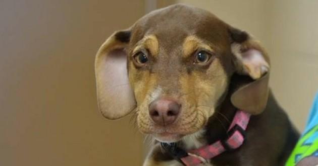 Peanut chienne fillette sauvée