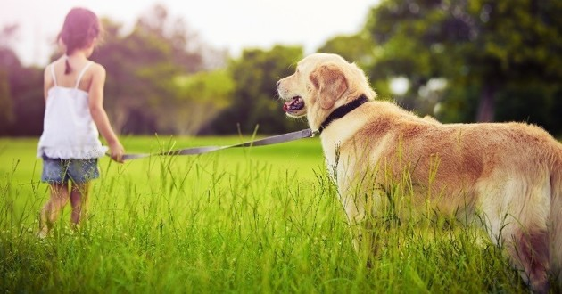 formation comportement chien PECCRAM