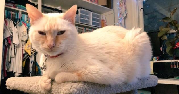 chatte beige peepee